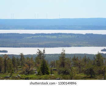 Summer landscape with spruce trees in the wilderness of Riisitunturi national park, a mountain in Lapland in Finland. Young trres on the foreground and windmills on the background.