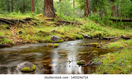 Summer landscape. Stream in the forest of larch. Photowall-paper, wallpaper in green tones.