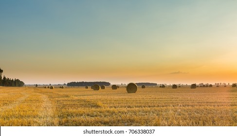 Summer landscape with stubble field and rolled bales of straw.
