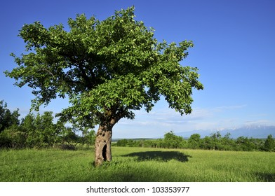 summer landscape with tree and blue sky
