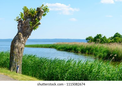 Summer landscape of Vistula Spit in Krynica Morska, Poland