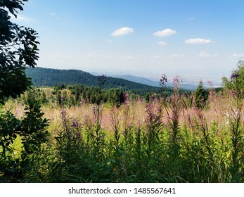 Summer landscape from Vitosha Mountain, Sofia, Bulgaria