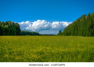 Summer landscape withtrees and field