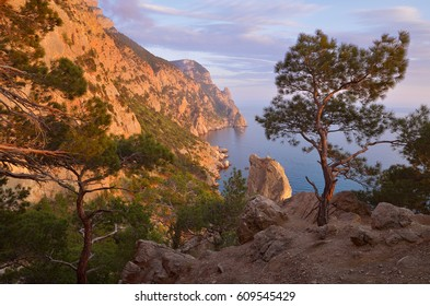 Summer landscape with wooded cliffs by the sea. Black Sea. Southern coast of Crimea