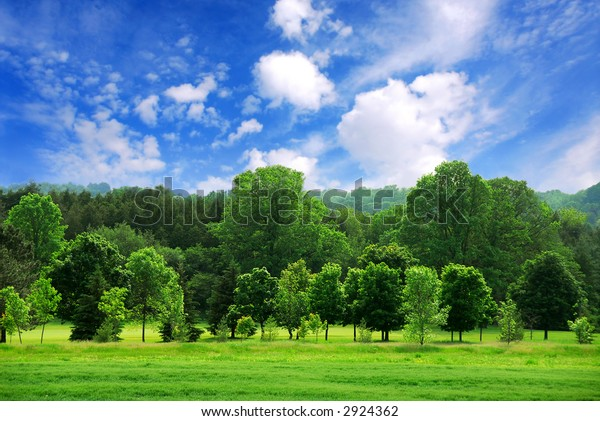 Sommerlandschaft des jungen grünen Waldes mit hellblauem Himmel