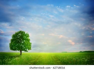 Summer landscape.Solitary tree on the dandelion field