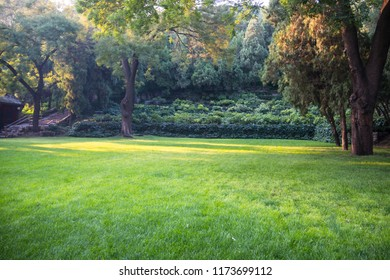 Summer lawn at sunset