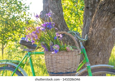 Summer leisure activity: bouquet of wild iris in the vintage wicker basket on the retro bicycle near the old apple tree trunk on sunny day