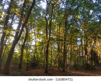 summer light shining through trees in the forest