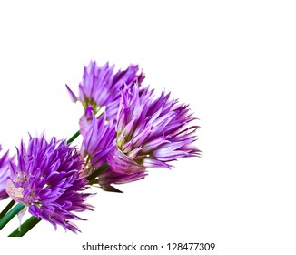 Summer lilac flowers isolated on white background