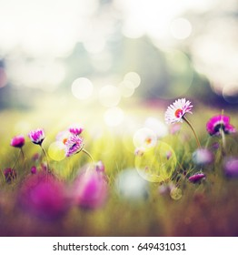 summer meadow with daisy flowers
