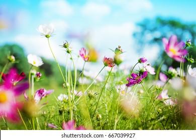 Sommerwiese mit blühenden Blumen