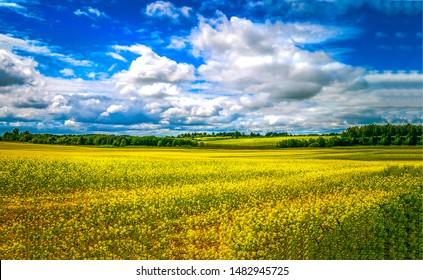 Summer meadow field landscape. Meadow field flowers in summer. Summer meadow field flowers. Yellow flowers in summer meadow field