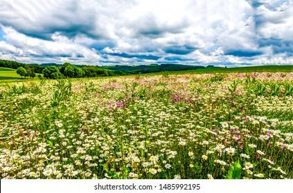 Summer meadow flower landscape.  Medow field grass and daisy flower at summer clouds sky. - Shutterstock ID 1485992195