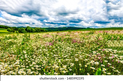 Summer meadow flowers field view. Meadow flowers scene. Meadow flowers in summer. Summer meadow flowers landscape