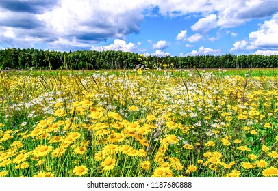 Summer meadow flowers scene. Meadow flowers view. Summer meadow flowers landscape. Meadow flowers summer scene
