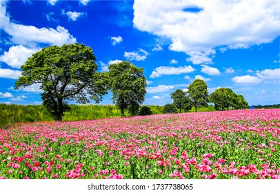 Summer meadow flowers trees landscape. Summertime meadow flowers view. Meadow flowers in summer