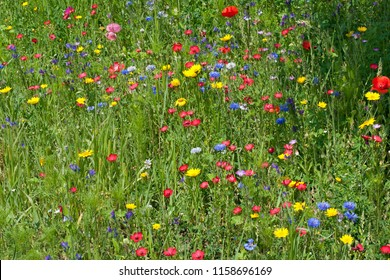 Summer meadow with lots of different blooming wild summer flowers