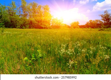 Summer meadow in nice day