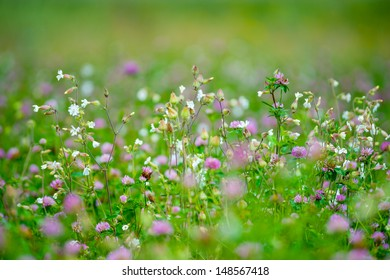 Summer meadow with various herbs, shallow depth of field