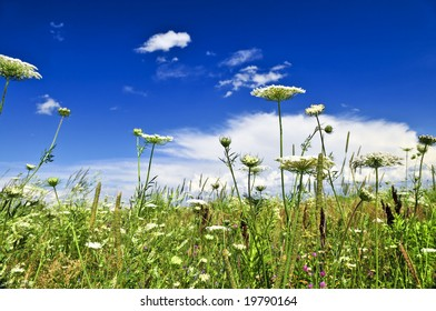 Summer meadow with wildflowers and blue sky