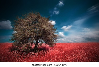 summer meadows red infrared landscape  with alone tree