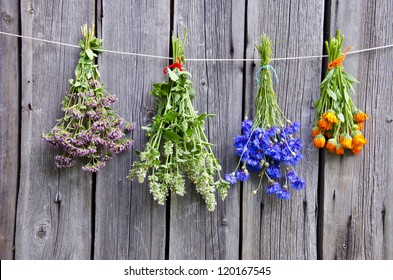 summer medical herbs bunches on old  wooden wall
