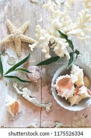 summer mermaid & shell