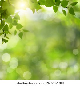 Summer morning. Abstract environmental backgrounds with green foliage and bokeh