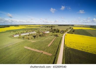 Summer morning in countryside, Tukums area, Latvia.