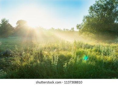 summer morning with dew in the field and the first rays of the sun