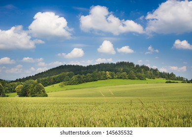 Summer morning landscape with grain on a meadow, small hill and blue sky with clouds