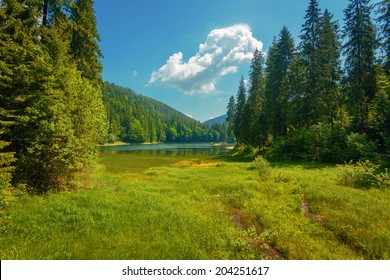 Summer mountain lake forrest