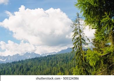 summer mountains green grass and blue sky landscape.