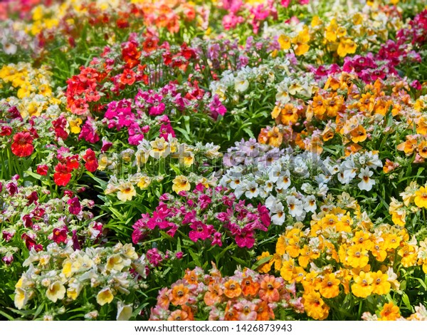 Summer Multicolor Flower Background Variety Flowers Stock Photo
