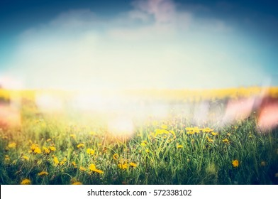 Summer nature background with  dandelion flowers and grass at sky