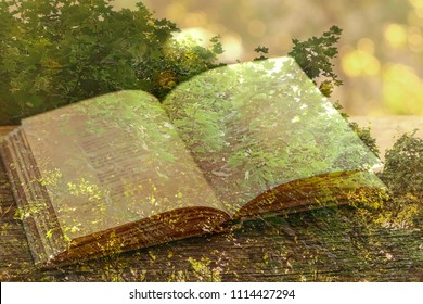 summer nature and the book. the concept of the second life of the tree. Double exposure effect. soft selective focus, blurred background.