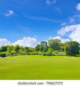 Summer nature park with bushes and trees. Extensive green meadow. On the blue sky light clouds.