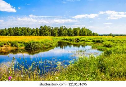 Summer nature river landscape. River grass summer view. Summer green river scene