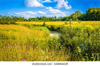 Summer nature river stream landscape. Summer meadow river stream. Summer river stream meadow. Summer nature river stream meadow view