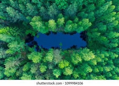 Summer nature. Vivid nature background. Lake in green forest aerial drone view.