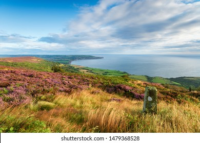 Summer on the North York Moors national park in Yorkshire, from Ravenscar looking out to Robin Hood's Bay