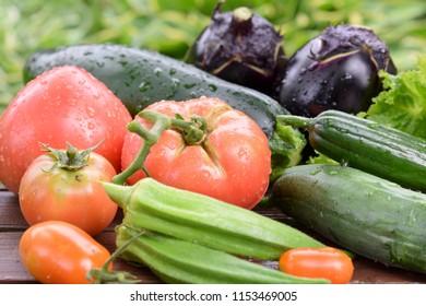 summer oraganic vegetables just harvested