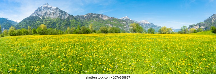 Summer panorama. Field of yellow dandelions. Mountain peaks in the background. The meadow of the Apis. Switzerland.