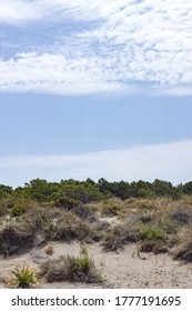 Summer panorama of sand dunes