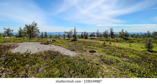 Summer panorama view at Riisitunturi, a fell and a national park in Kuusamo, Finland.  Peaceful evergreen trees in the clean and green nature landscape of Finnish Lapland.