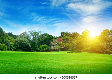 summer park with beautiful green lawns