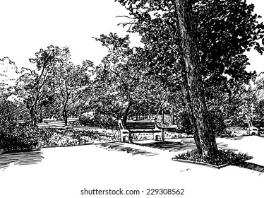 Summer park scene. Hand drawn with pen and ink