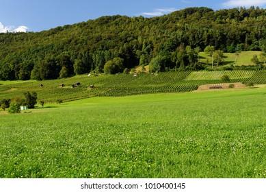 Summer pastoral landscape in Switzerland