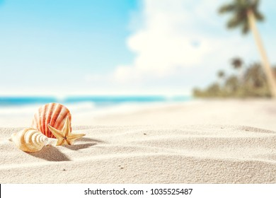 Summer photo of beach and shell decoration.